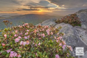 Carolina Rhododendron Sunset, Hawksbill.  (Photo: Cathy Anderson)